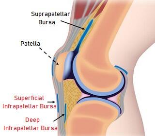 Superficial and Deep Infrapatellar bursa
