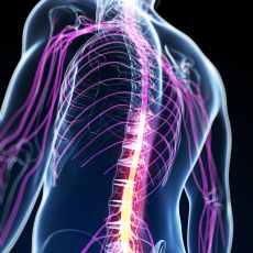 Ultrasound-Guided Neuromuscular Diagnosis
